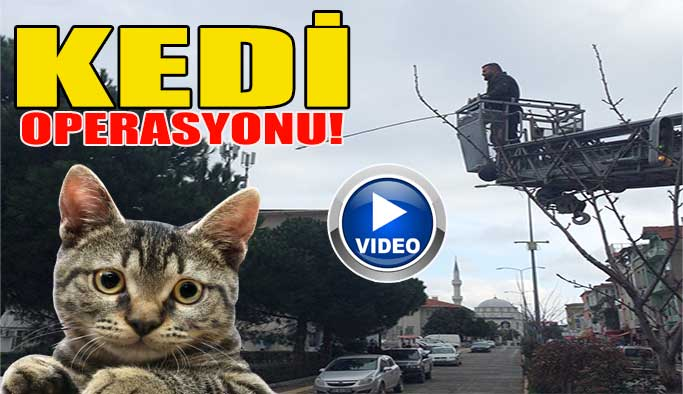 Ağaçtan Kedi Kurtarma Operasyonu!