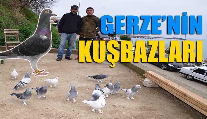 Gerze'nin Kuşbazları