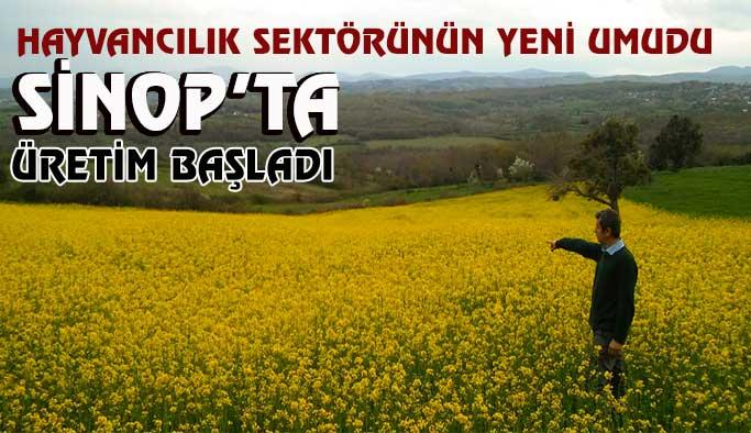 Sinop'ta 'lenox' bitkisi üretilmeye başlandı
