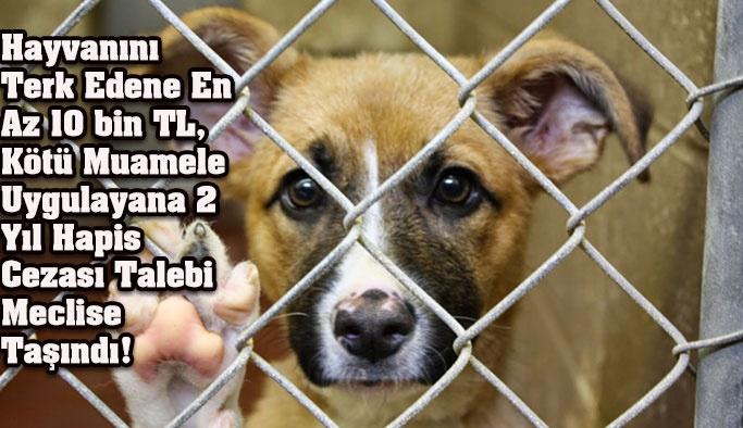 Hayvan Hakları Koruma Yasası Mecliste