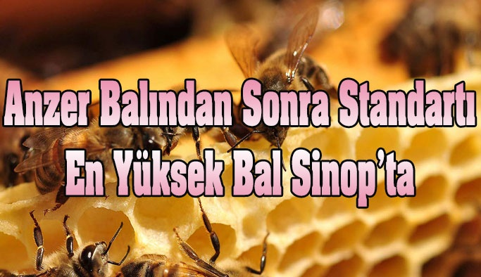 Standartı En Yüksek İkinci Bal Sinop'ta