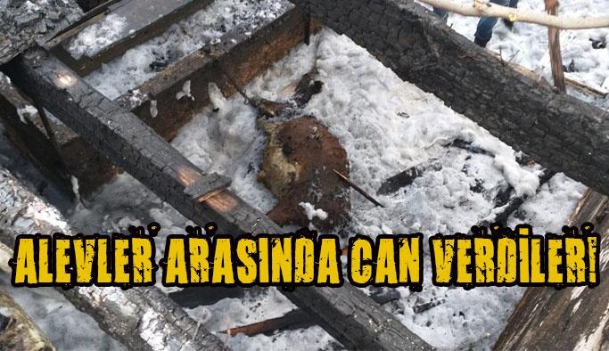 Yangında Bütün Hayvanlar Telef Oldu