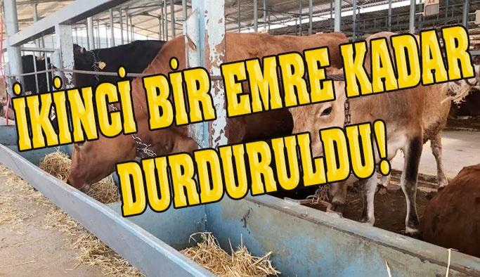 Sinop Hayvan Sağlığı ve Zabıtası Komisyon Kararı
