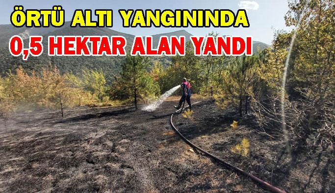 0,5 Hektar Alan Yandı