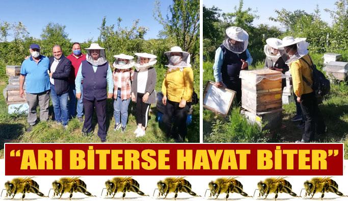 """Kuru: """"Sinop' a Arıcılık Üniversitesi İstiyoruz"""""""