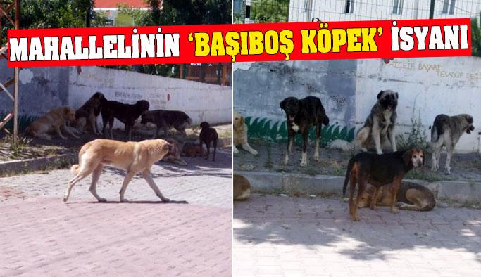 Mahallelinin köpek isyanı