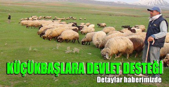 Anaç Koyun Keçi Desteği Başvuruları Başladı