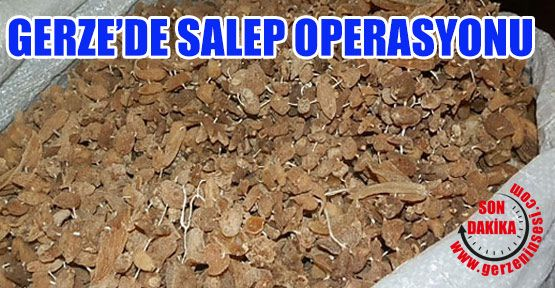 Gerze'de Salep Operasyonu