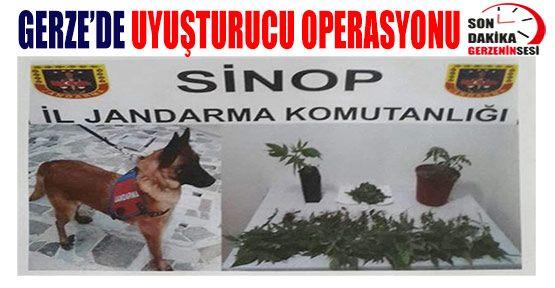 Gerze'de Uyuşturucu Madde Operasyonu