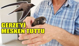 Aşırı sıcaklara Ebabil Kuşu da dayanamadı