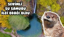 Sevimli su samuru ilgi odağı oldu