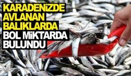 Karadeniz'deki balıklarda bakın ne çıktı?