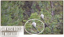 Çam Kese Böceği ile Biyolojik Mücadele