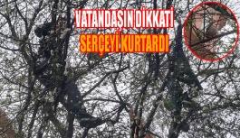 Ağacın Dalına Takılan Serçeyi Kurtardılar