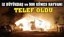 Türkeli'de feci yangın: Çok sayıda...