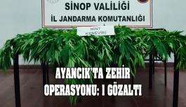Ayancık'ta zehir operasyonu: 1 gözaltı