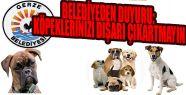 Belediyeden Duyuru: Köpeklerinizi Dışarı...