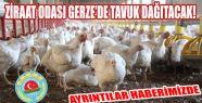 Et ve Yumurta Tavuğu Dağıtılacak