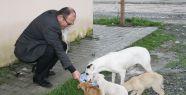 Gerze Belediyesi Sokak Köpeklerine Sahip...
