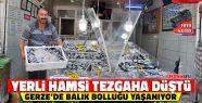 Karadeniz Hamsisi Gerze'de Tezgaha İndi