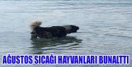 Sahipsiz Köpek Serin Suların Tadını...