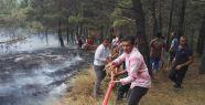 Sinop'taki yangında 30 dönüm kül oldu