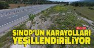 Sinop'un Karayolları Yeşillendiriliyor
