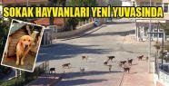 Sokak Hayvanları Yeni Yuvalarında