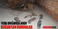 Yavru Köpekler Donarak Öldü